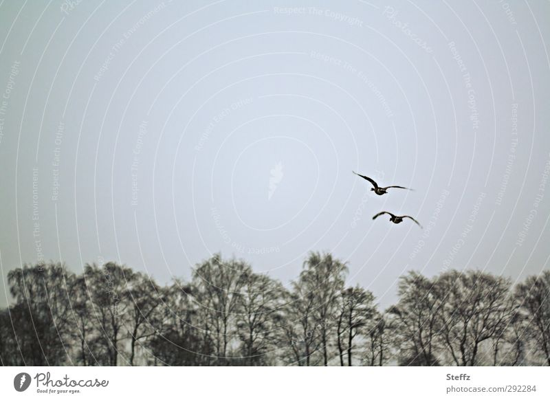 flugartig Natur Baum Tier Winter Bewegung grau Freiheit fliegen Vogel Zusammensein Wetter trist Tierpaar frei Flügel Zusammenhalt