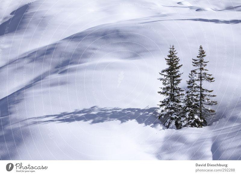 Eheleute Tanne Natur Landschaft Winter Schönes Wetter Eis Frost Schnee Pflanze Baum Hügel Alpen Berge u. Gebirge blau grün schwarz weiß Partnerschaft
