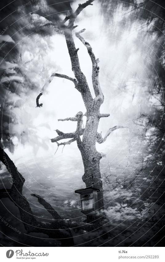 alte Häuser | Herr von Ribbeck Baum Birnbaum Garten hängen dehydrieren Wachstum kaputt natürlich grau schwarz weiß Nistkasten Schwarzweißfoto Außenaufnahme