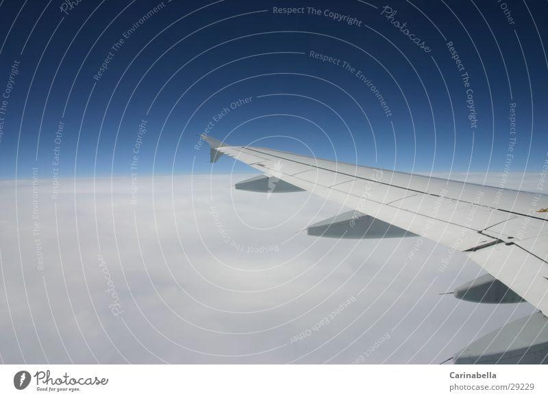 Blue Himmel blau Wolken grau Flugzeug fliegen Luftverkehr Flügel