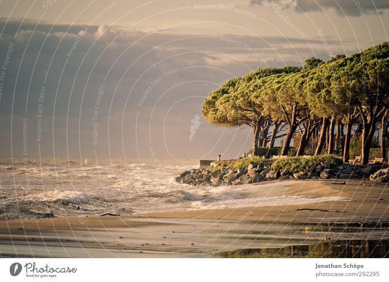 Korsika II Natur Ferien & Urlaub & Reisen Sommer Baum Meer Landschaft Strand Erholung Umwelt Freiheit Schwimmen & Baden Wellen Insel Idylle Wellness