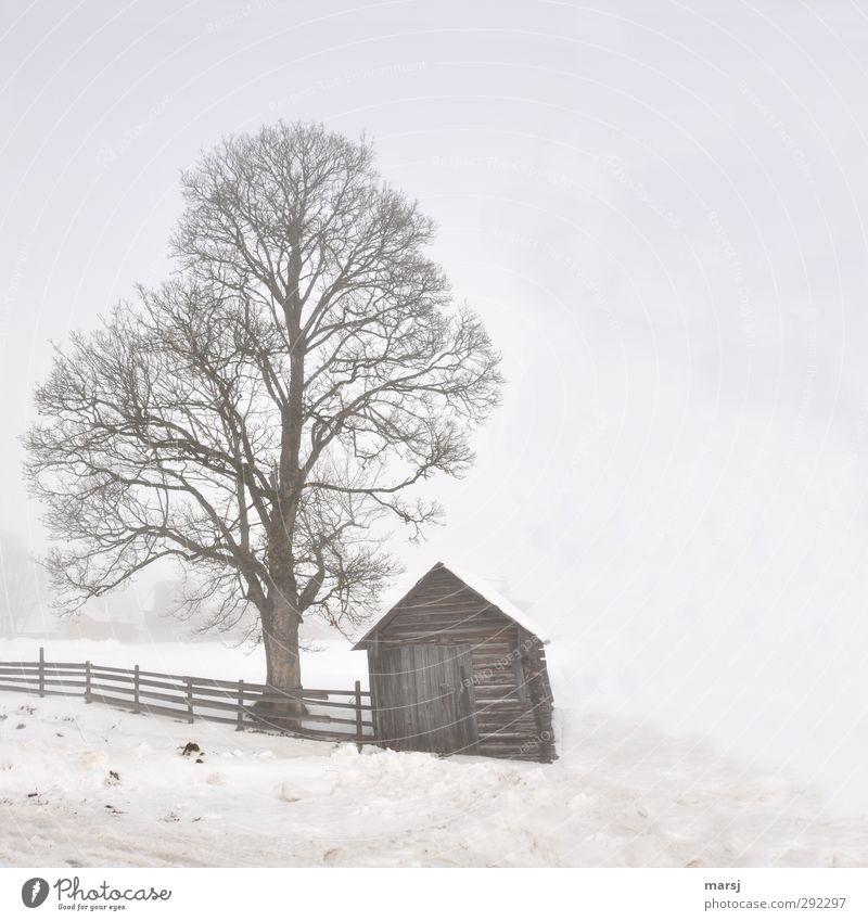 Alte Häuser | im Nebel Zaun Winter Eis Frost Schnee Pflanze Baum Haus Hütte Heuschober Heustadl Holz alt kalt braun Stimmung Farbfoto Gedeckte Farben