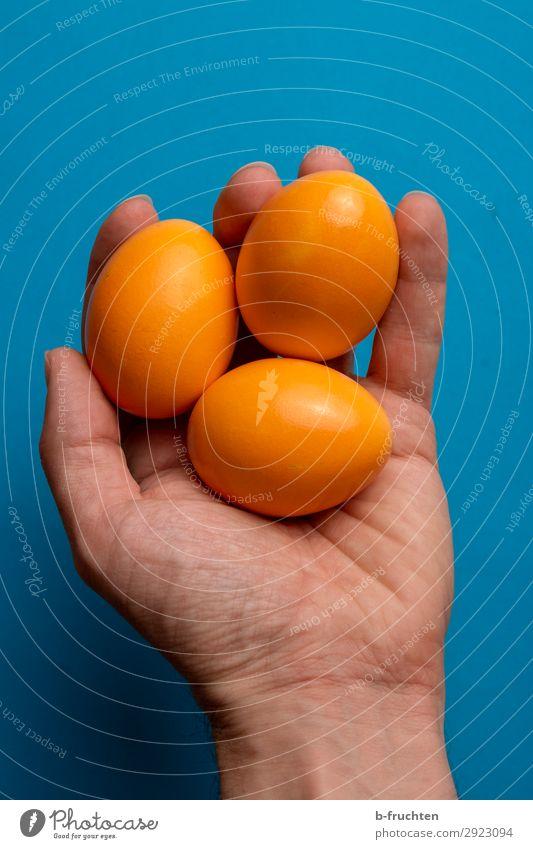 Drei Ostereier in der Hand Lebensmittel Bioprodukte Gesunde Ernährung Feste & Feiern Ostern Mann Erwachsene Finger wählen berühren festhalten frisch blau orange