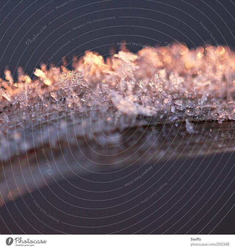 Raureif auf einem Grashalm in warmem Abendlicht Kälteschock klirrende Kälte Eiskristalle frostig Kälteeinbruch Wintereinbruch nordisch warmes Abendlicht Halm