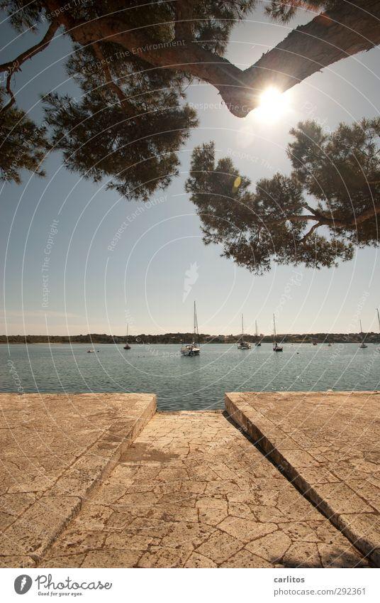 Noch 8 Wochen bis zur Sommerzeit Luft Wasser Himmel Schönes Wetter Wärme Baum Kleinstadt Schwimmen & Baden Hafen Anlegestelle Segelboot Jacht Reichtum Meer