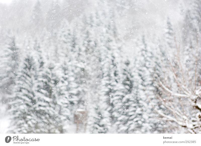 Weiße Pracht Umwelt Natur Landschaft Winter Eis Frost Schnee Schneefall Baum Fichte Tanne Wald Hügel hell kalt weiß Winterlicht Farbfoto Gedeckte Farben