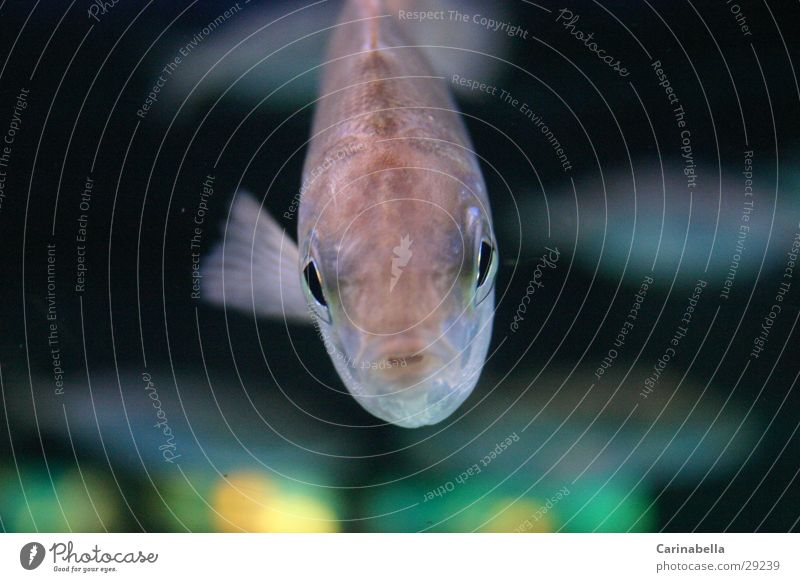 Notnemo Aquarium Fisch Schwimmhilfe