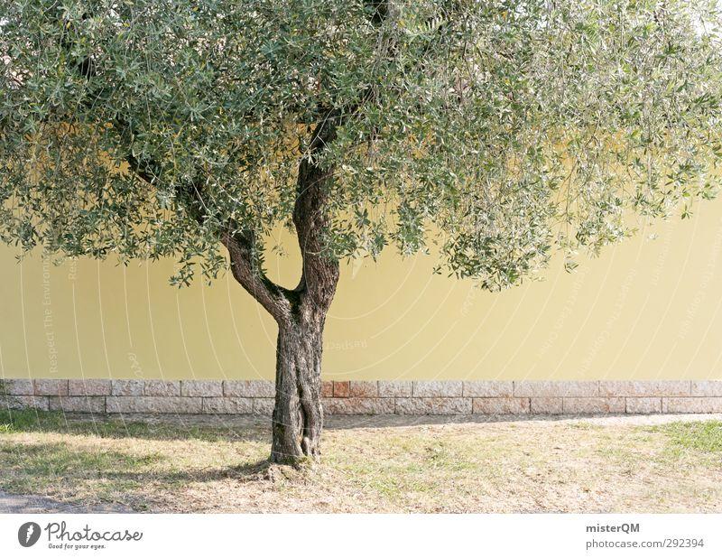 Yellow Tree. Kunst ästhetisch gelb Baum Olivenbaum grün Blatt Baumstamm Olivenblatt Mauer mediterran Italien Farbfoto Gedeckte Farben Außenaufnahme