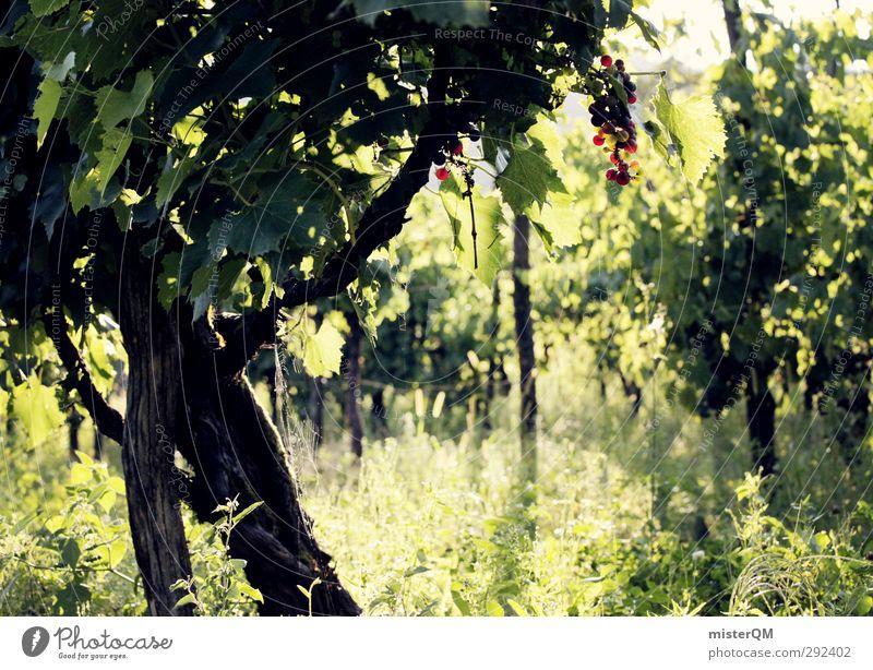 Weinberg. Umwelt Natur Landschaft Pflanze ästhetisch Weintrauben Weinbau Weinlese Weingut grün Italien Farbfoto Gedeckte Farben Außenaufnahme Detailaufnahme