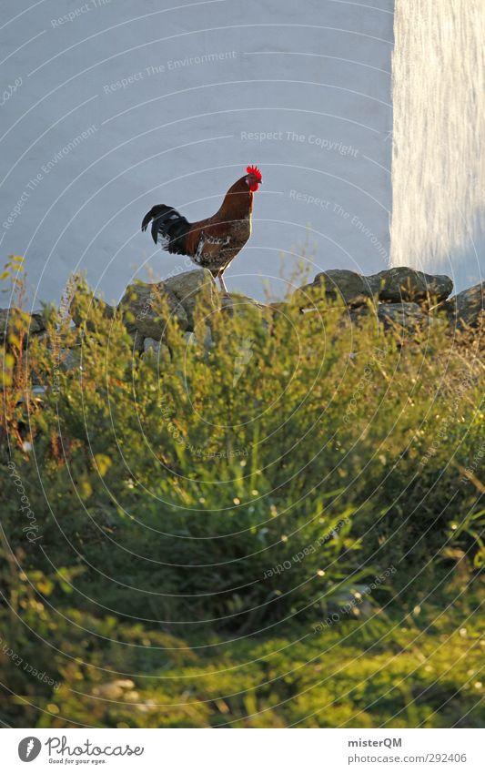 Le coq est mort. Mauer Kunst ästhetisch Bauernhof Portugal Stall Hahn Hahnenkamm Freilandhaltung