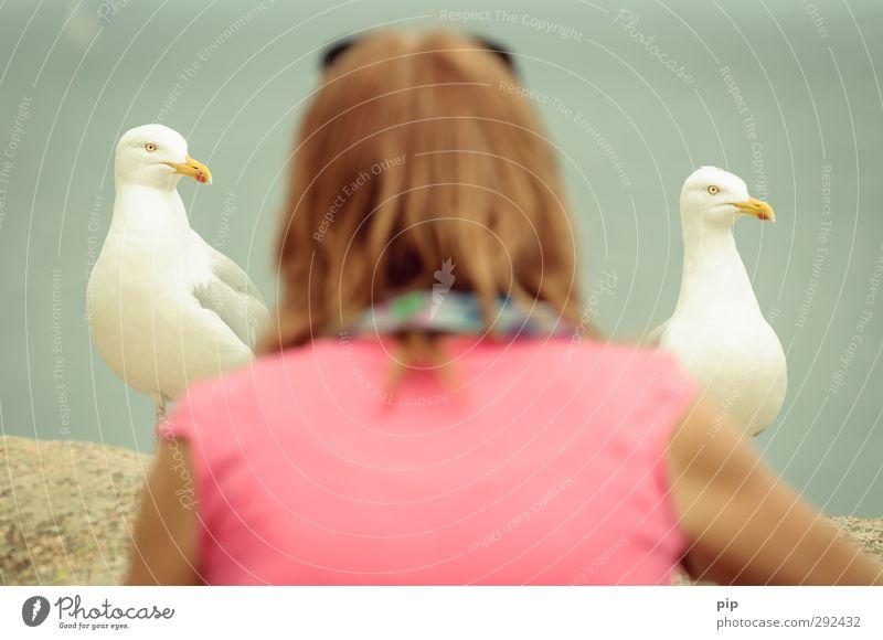 zwischen möwen Wildtier Möwe Schnabel 2 Tier Neugier Vogel Gedeckte Farben Detailaufnahme Blick in die Kamera