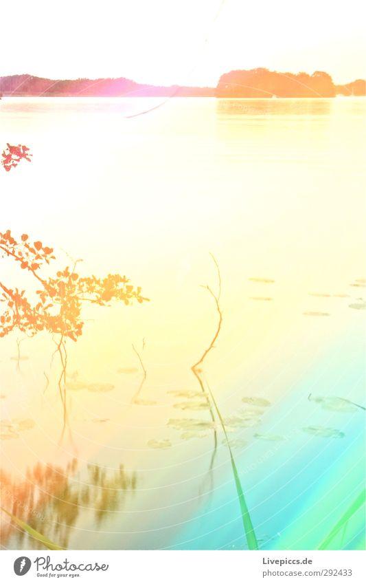 gelber Schnee (natürlich abgetaut) Himmel Natur grün Wasser Sommer Pflanze Baum Sonne Farbe Blatt Wolken Landschaft Umwelt See Kunst