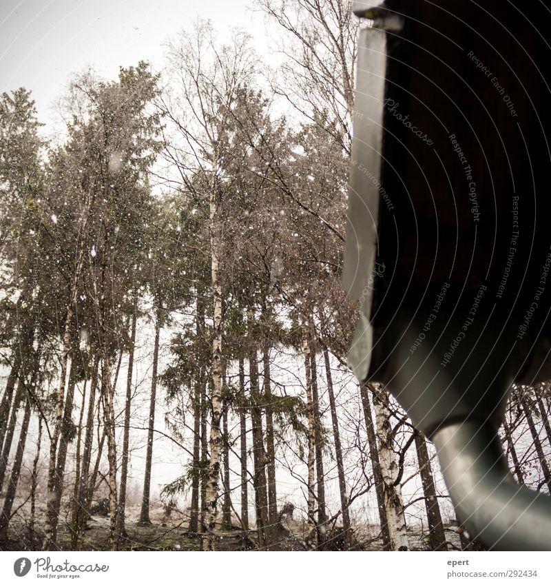 Schöne Aussichten Landschaft Winter Schnee Schneefall Pflanze Baum Wald Dach Dachrinne Perspektive Gedeckte Farben Außenaufnahme Tag Kontrast