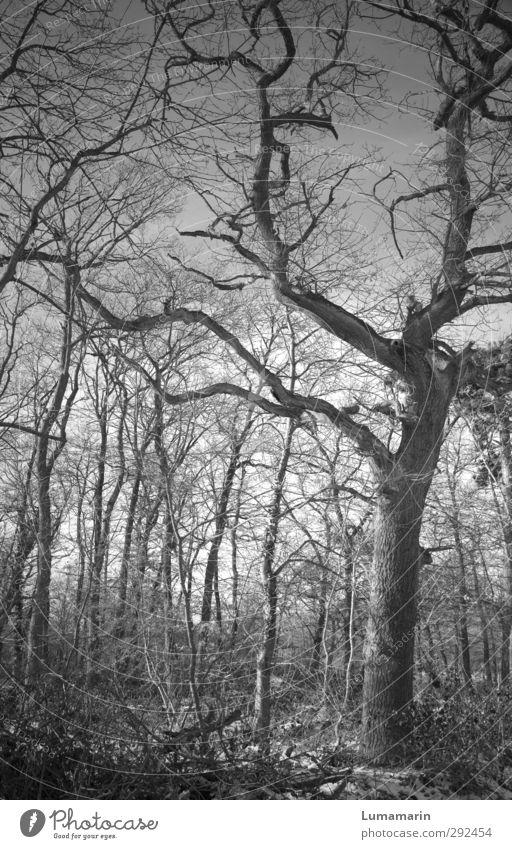 strange highs strange lows Natur Landschaft Tier Winter Pflanze Baum Wald Holz stehen alt dunkel gruselig trist Stimmung Kraft Traurigkeit Senior geheimnisvoll