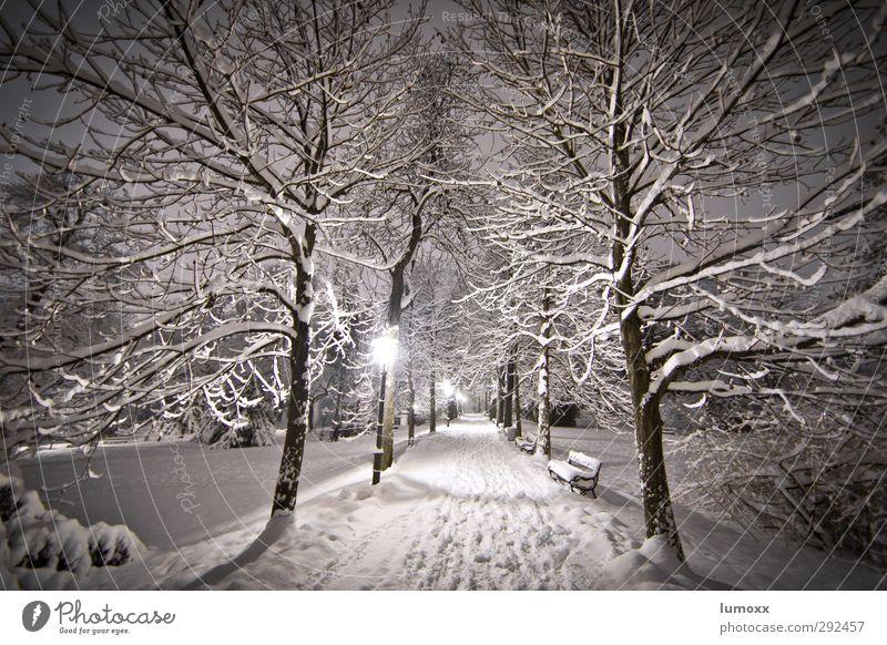 winterwandern Winter Schnee Schneefall Baum Park Graz Wege & Pfade frieren kalt braun grau weiß Parkbank Laterne Schneespur Schneelandschaft Schneedecke