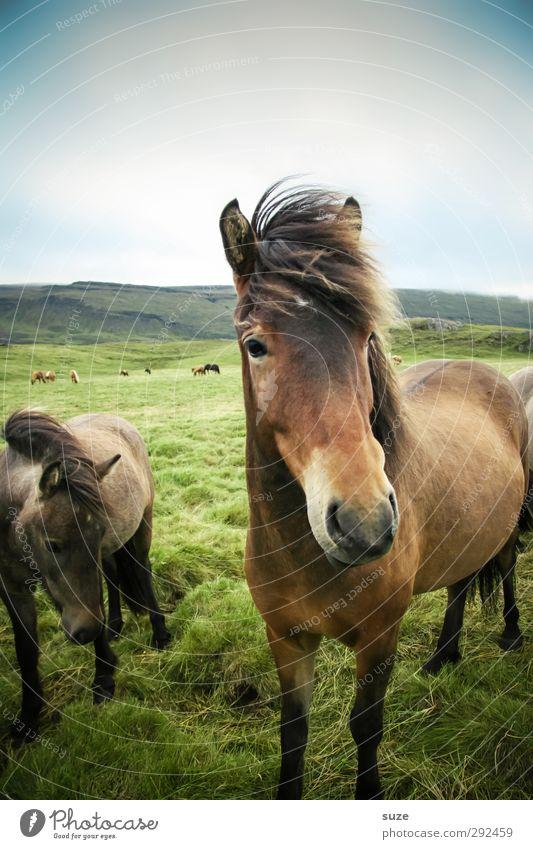 Freund Natur Landschaft Tier Himmel Wolken Schönes Wetter Wind Wiese Nutztier Wildtier Pferd Tiergesicht 2 stehen warten ästhetisch Freundlichkeit natürlich