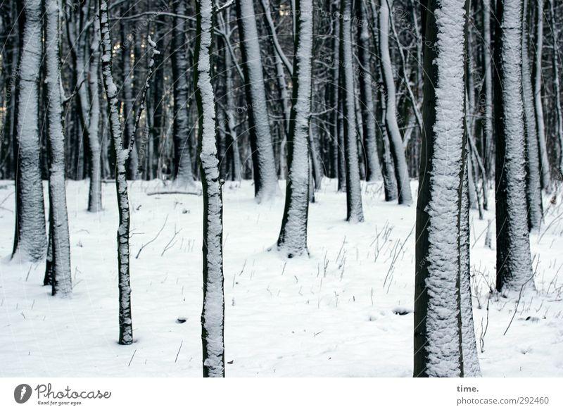 Winterschlaf Natur Pflanze Baum ruhig Wald Umwelt kalt Schnee Zusammensein Klima elegant groß mehrere Wandel & Veränderung Ast