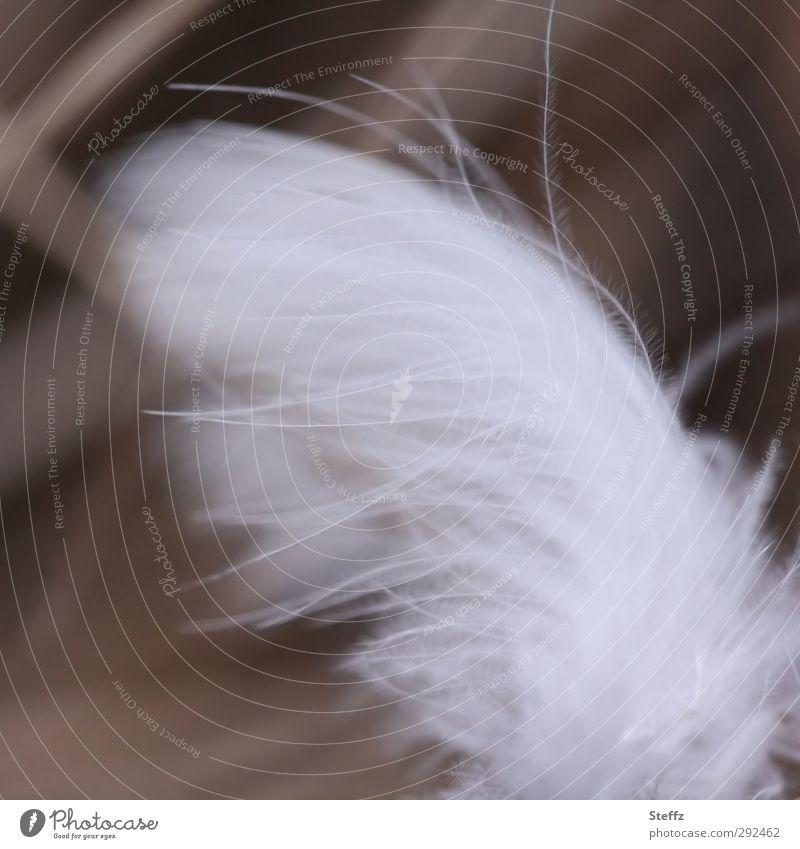hauchzarte Feder federleicht Vogelfeder Flügel weiß weich sanft zerzaust fein klein Leichtigkeit federartig Flaum Federn filigran flüchtig Schweben schwerelos