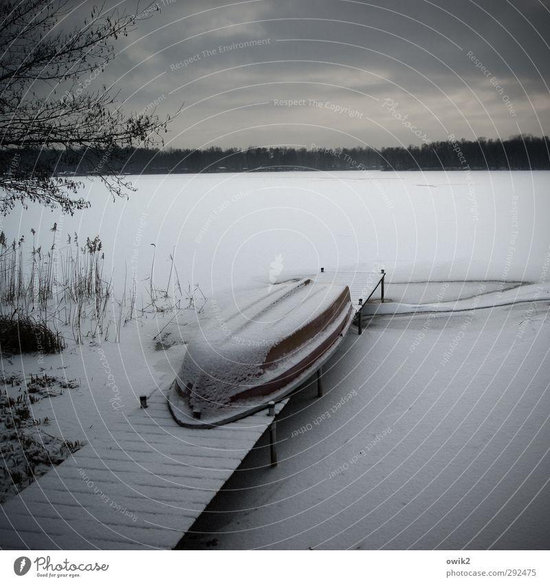 Warten und frieren Umwelt Natur Landschaft Himmel Wolken Winter Klima Wetter Schönes Wetter Eis Frost Schnee Pflanze Baum Sträucher Zweige u. Äste karg Seeufer
