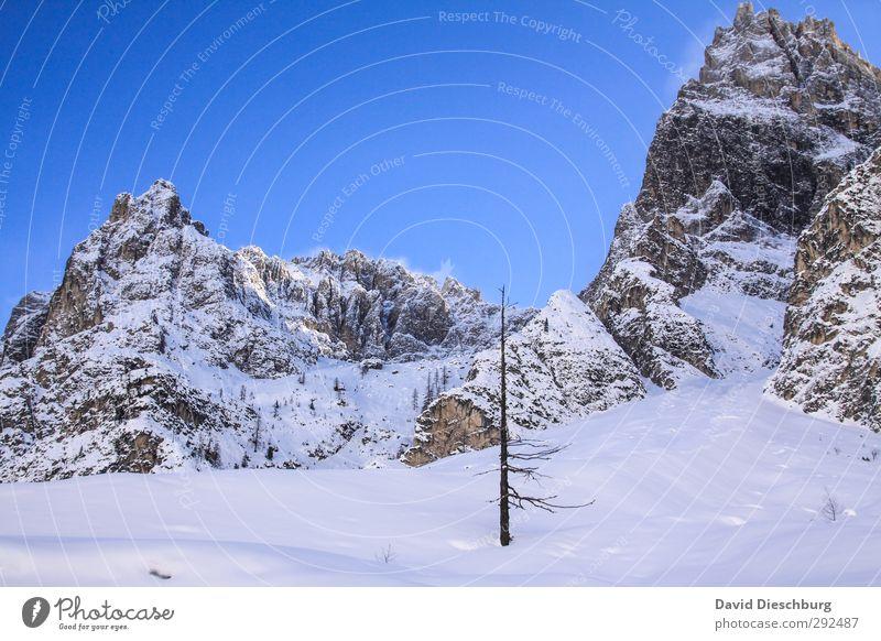 Baumgrenze Ferien & Urlaub & Reisen Abenteuer Ferne Freiheit Expedition Winterurlaub Berge u. Gebirge wandern Landschaft Wolkenloser Himmel Schönes Wetter Eis