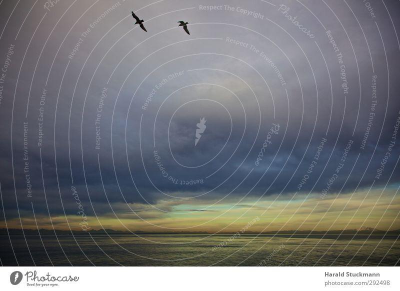 Sonnenuntergang in der Strait of Georgia Himmel Natur blau Ferien & Urlaub & Reisen Wasser Meer Wolken Landschaft gelb Umwelt grau Hintergrundbild Horizont