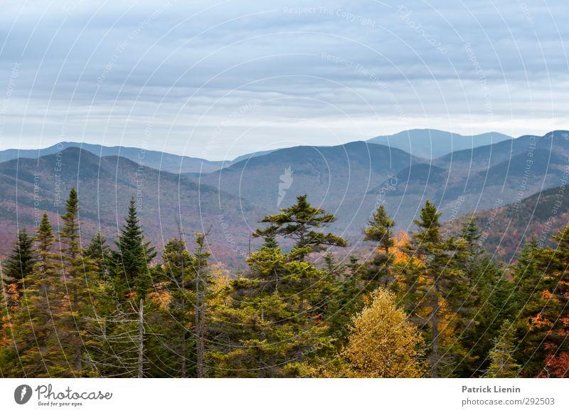 White Mountains Natur Ferien & Urlaub & Reisen Pflanze Landschaft Umwelt Herbst Klima Zufriedenheit Urelemente Grünpflanze