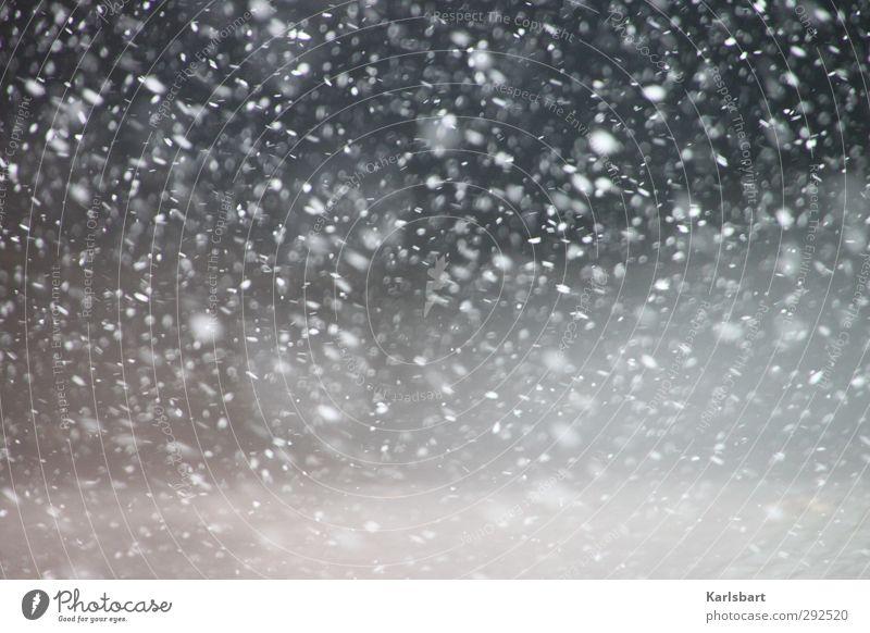 Schneenebel Winter Winterurlaub Umwelt Natur Wetter Sturm Nebel Schneefall Straße Wege & Pfade Wasser kalt Bewegung chaotisch Erholung erleben Irritation