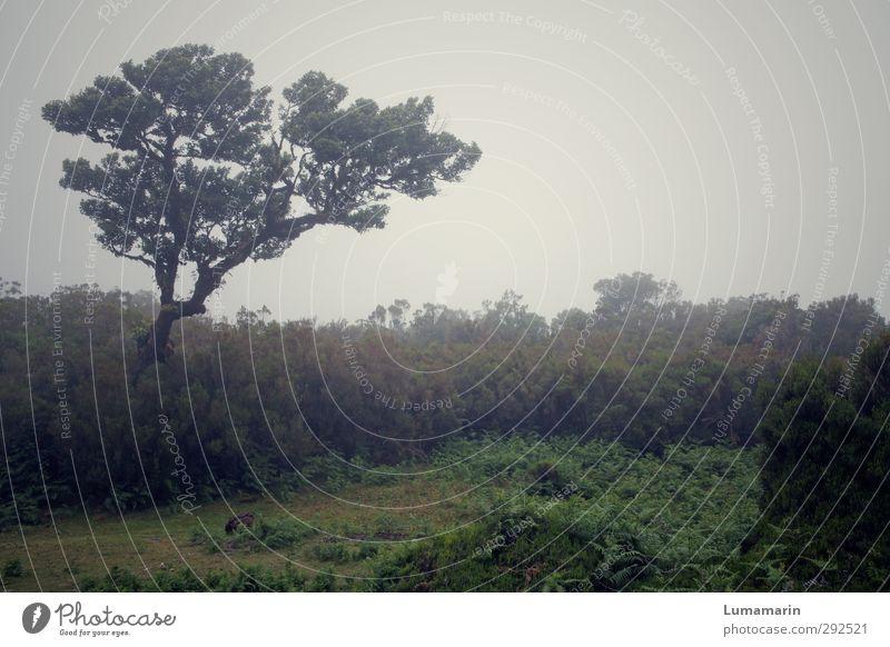 Dasein Umwelt Landschaft Tier schlechtes Wetter Nebel Pflanze Baum Sträucher dunkel kalt Gefühle ruhig Einsamkeit Vergänglichkeit Madeira Wachstum trist