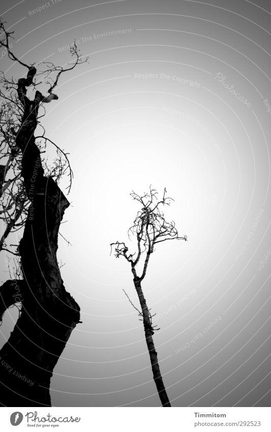 Beziehung. So und so. Himmel Natur weiß Baum Winter schwarz Umwelt Gefühle grau ästhetisch einfach Partnerschaft Zuneigung