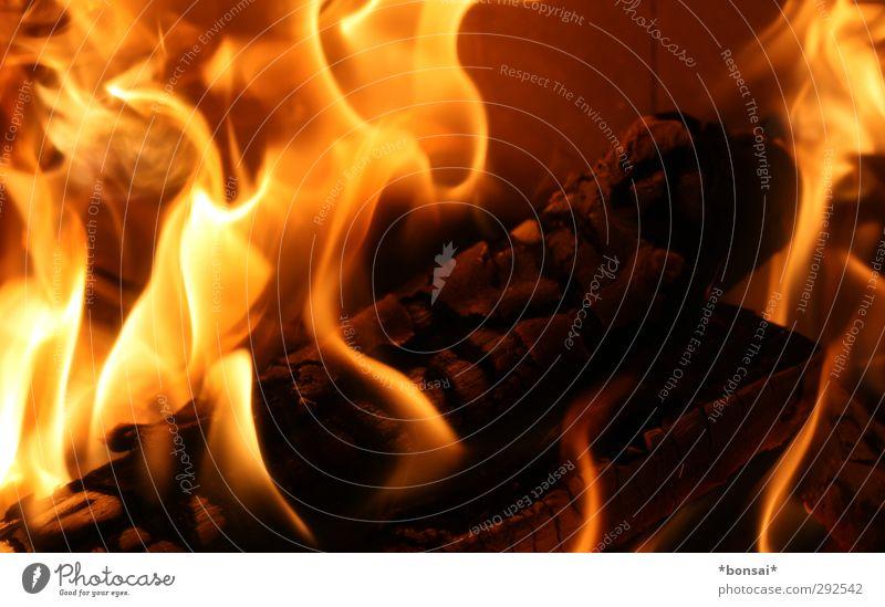 fuego! Natur gelb Wärme Bewegung Holz hell glänzend orange wild leuchten Kraft ästhetisch bedrohlich Warmherzigkeit Urelemente Feuer