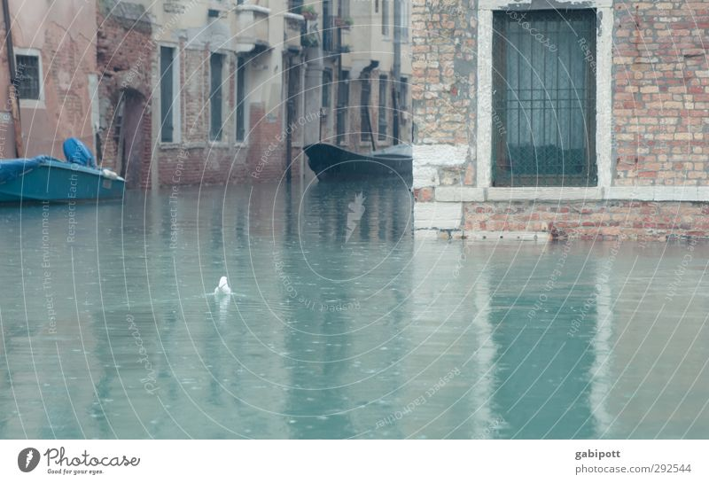 und der Regen Regen Regen fiel Venedig grau Wassermassen Kanal Überschwemmung Schwimmen & Baden Wasserfahrzeug nass kalt Farbfoto Gedeckte Farben Außenaufnahme