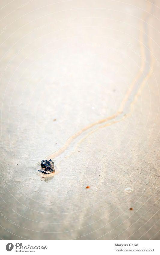 Krabbe in der Muschel Erholung Ferien & Urlaub & Reisen Sommer Strand Natur Sand Tier Wildtier 1 nass grau Australien Hintergrundbild Spuren Meer Farbfoto