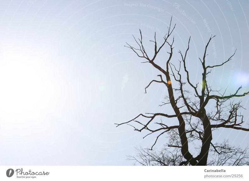 Light Gegenlicht Baum Licht Sonne Reflexion & Spiegelung Himmel Baumstamm Ast
