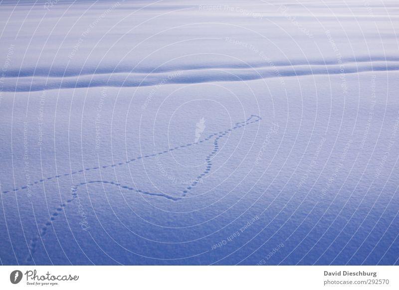 Spuren im Schnee Ferien & Urlaub & Reisen blau weiß Landschaft Winter kalt Eis Schönes Wetter Frost gefroren Fußspur Wintersport Fährte Schneedecke
