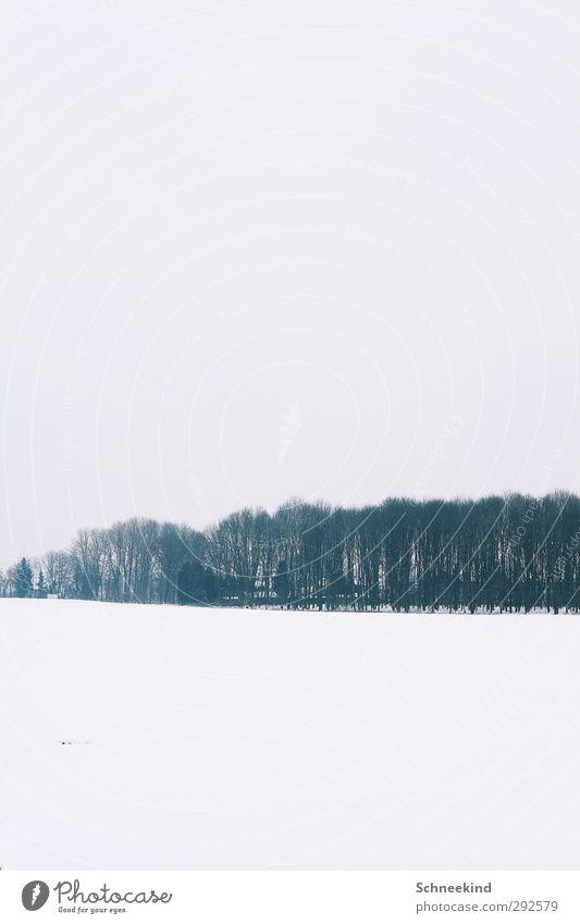 Winter II Umwelt Natur Landschaft Urelemente Erde Himmel Eis Frost Schnee Schneefall Baum Sträucher Wildpflanze Wiese Feld Wald schön Luft Baumreihe einfarbig