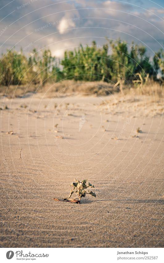 Korsika X Ferien & Urlaub & Reisen Freiheit Sommer Sommerurlaub Sonnenbad Strand Meer Insel Wellen Umwelt Natur Landschaft Lebensfreude Sandstrand