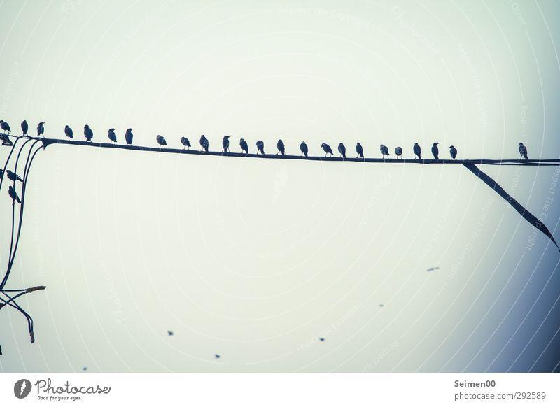 In the line. Wildtier Vogel Schwarm Rudel beobachten sprechen Blick schaukeln stehen authentisch frei hoch Stimmung Fröhlichkeit Zufriedenheit Coolness gleich