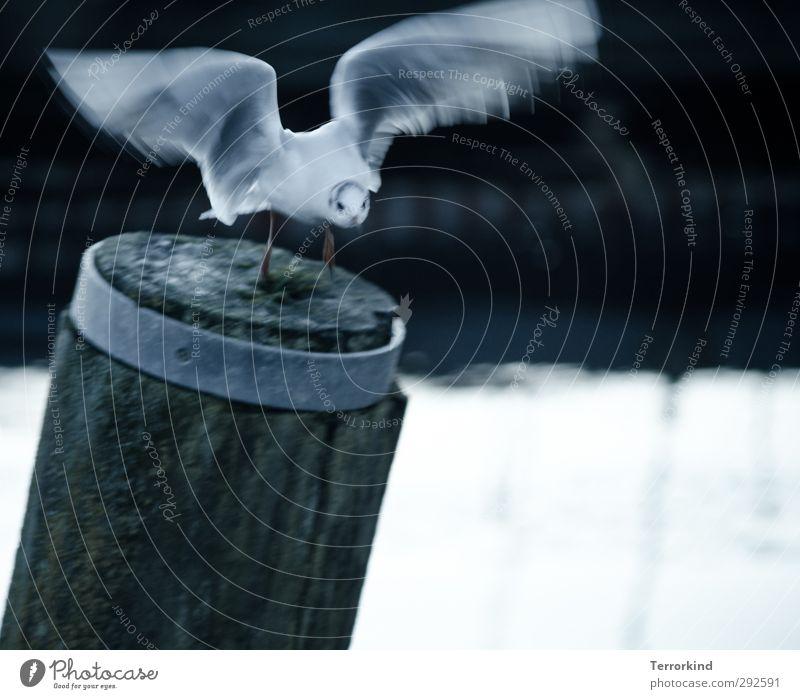 lucky.shot Tier Vogel 1 fliegen Geschwindigkeit wild grau schwarz weiß Euphorie Reinheit ästhetisch Kraft Leichtigkeit Farbfoto Gedeckte Farben Außenaufnahme