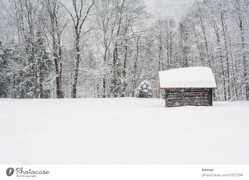 Februarschnee Umwelt Natur Landschaft Pflanze Winter Eis Frost Schnee Schneefall Baum Wiese Hütte frisch hell kalt klein weiß Tiefschnee Gedeckte Farben