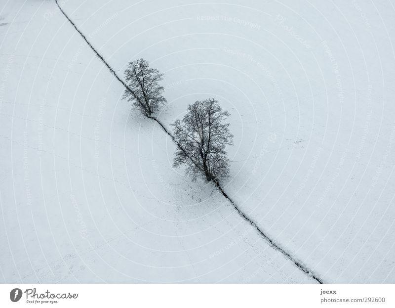 Der große Bruder Natur Landschaft Winter Wetter Schnee Baum Feld grau schwarz weiß kalt Farbfoto Gedeckte Farben Außenaufnahme Luftaufnahme Menschenleer Tag