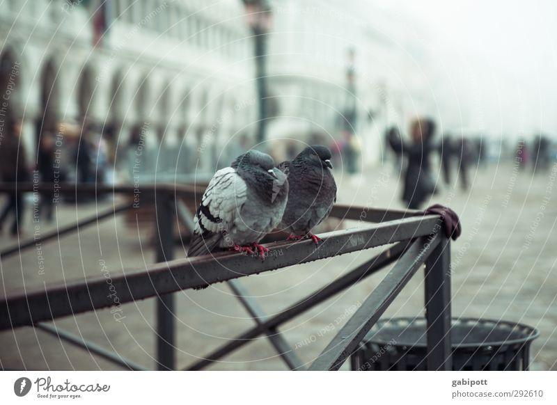 Marco's Tauben schlechtes Wetter Regen Venedig Markusplatz Piazza San Marco Platz Tier 2 kalt trist Farbfoto Gedeckte Farben Außenaufnahme Tag Licht
