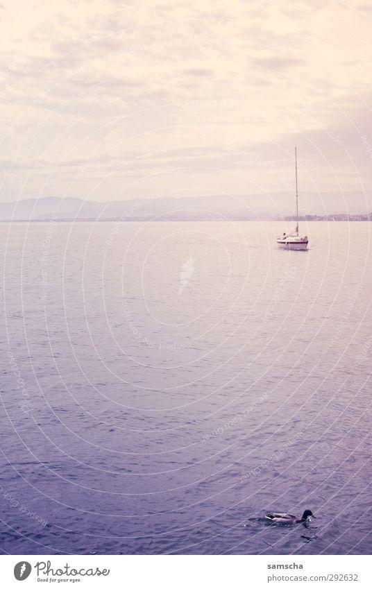 Seeufer Angeln Ferien & Urlaub & Reisen Tourismus Ausflug Sommer Wassersport Umwelt Natur Landschaft Himmel Wolken Küste Schifffahrt Bootsfahrt Sportboot Jacht