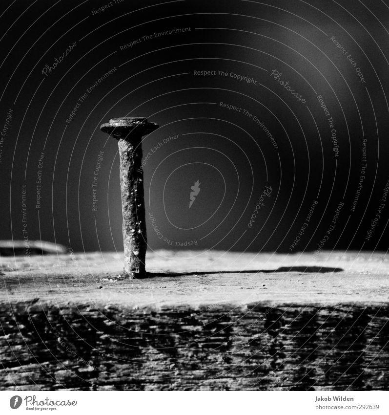 Rostiger Nagel Natur Wasser Stadt Umwelt Holz grau Metall Schönes Wetter trocken