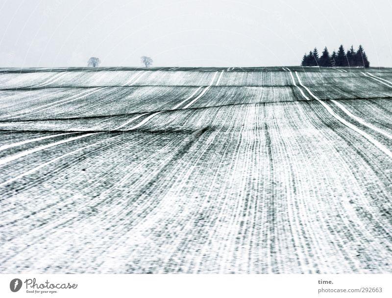Winterschläfchen Himmel Natur Baum Einsamkeit Winter Landschaft ruhig Umwelt Ferne Schnee Wege & Pfade Horizont Eis Feld Zufriedenheit Wandel & Veränderung