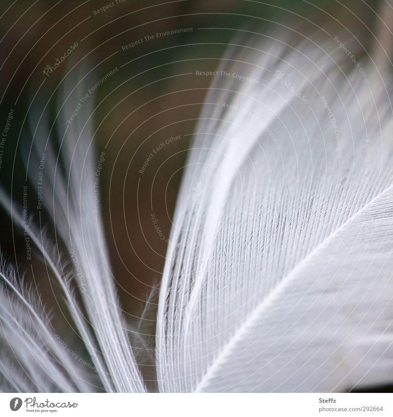 federleicht zerzaust Natur Vogel Feder Flügel natürlich schön weich weiß Leichtigkeit Schweben sanft Makroaufnahme Daunen zart Vor dunklem Hintergrund samtig