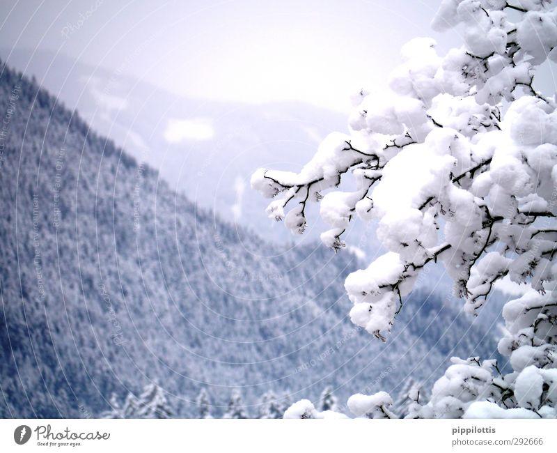 Weißröckchen Natur blau schön weiß Baum Winter Landschaft Wald Ferne Berge u. Gebirge kalt Schnee grau Gesundheit natürlich Eis