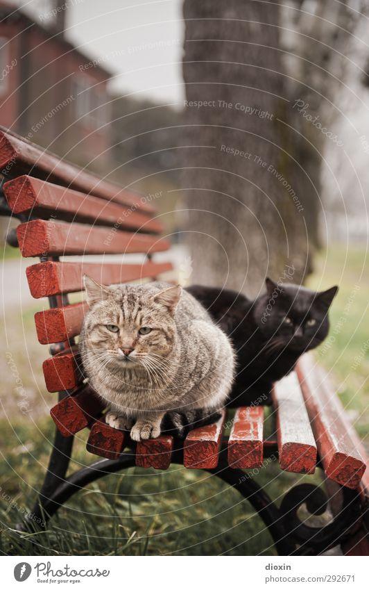 Black and orange stray cat sittin' on a bench - Vol.1 Katze Tier Park wild sitzen Haustier kuschlig hocken Parkbank Herumtreiben verwildert