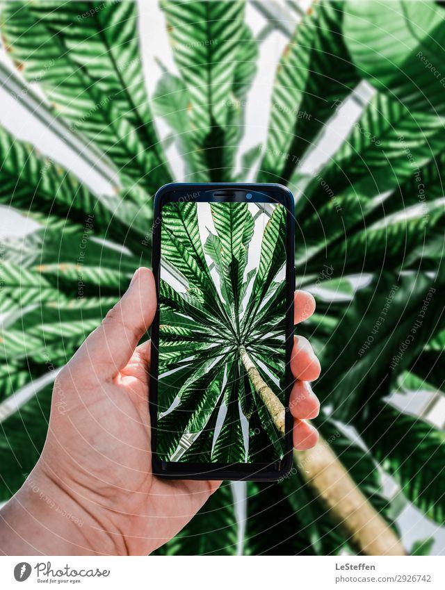 Smartphone Foto einer Palme Totale Froschperspektive Gegenlicht Sonnenlicht Kontrast Licht Tag Textfreiraum oben Textfreiraum rechts Textfreiraum links