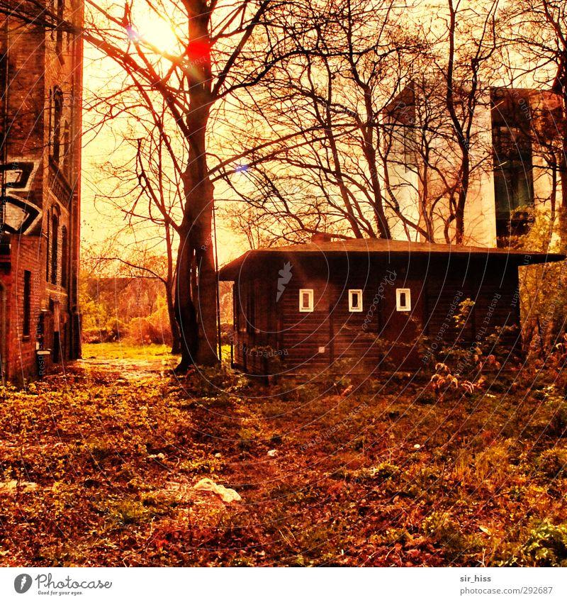 Alte Häuser (nachgelegt)   Treffen der Generationen alt Pflanze Baum rot Blatt gelb orange Fassade Armut modern retro Burg oder Schloss Hütte Ruine Nostalgie