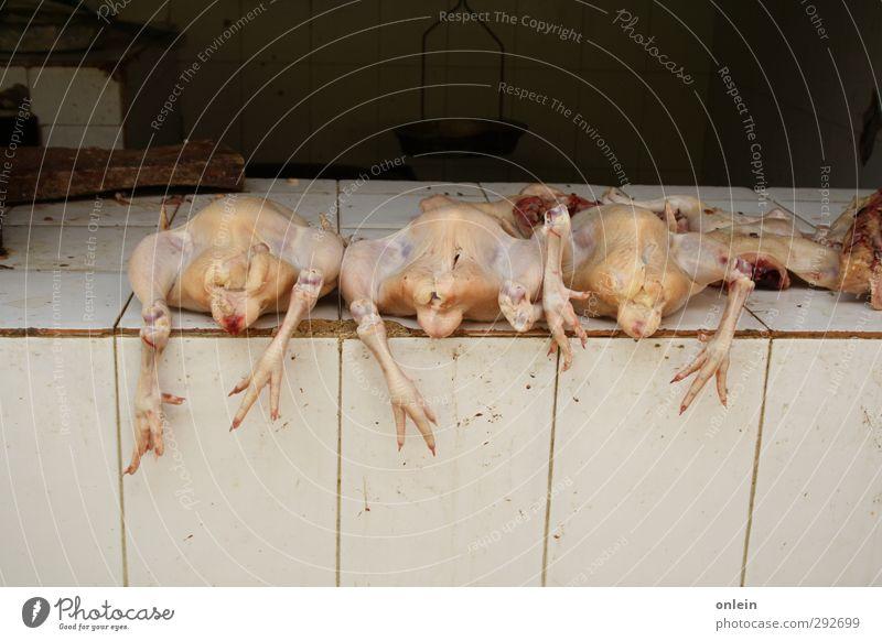 """Wenn Hennen nicht mehr rennen... Lebensmittel Fleisch Geflügel Punta Cana Marktplatz Mauer Wand Tier Nutztier Totes Tier Vogel """"Huhn Hahn Suppenhuhn"""" 3"""